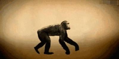 我们是从古猿进化来的,那古猿又是从哪来的?