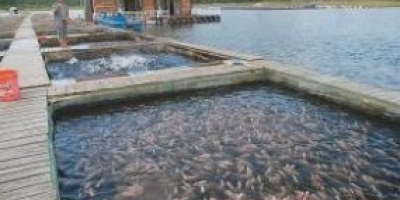 南方地区棚户养什么鱼合适?