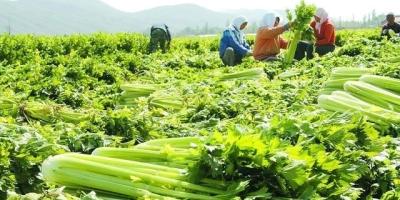 失业,想做蔬菜批发,就是在菜农那里收菜,再到市场批发,怎么起步?