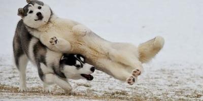 狗狗打架的真正原因是什么?