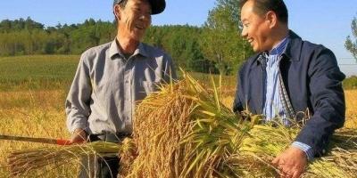 好多农民因为种植水稻没有多大收益,所以不种了。会有什么影响?