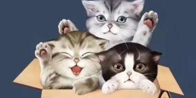 带回家的流浪猫,家里几只猫一直打它,它不还手吓得一直躲着,怎么办?