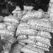 为什么那些批发大蒜头,生姜,土豆的仓库堆得山一样都不发芽,买回家放几天就发芽呢?