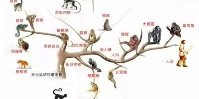 按照物种起源的说法,那我们是不是可以人为地创造一个环境,来揭开物种进化的奥秘?