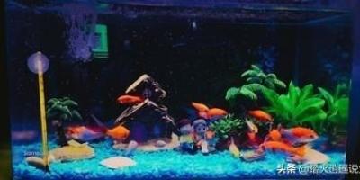 鱼缸过滤棉洗过的水能浇花吗?如何?