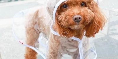 发现淘宝上有很多卖宠物狗雨衣的、且还有名牌,这一现象你怎么看?