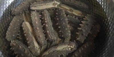 如何在家里简单有效的泡发海参?