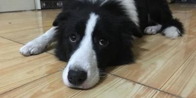 狗狗会记仇吗?