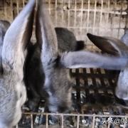 可以分享一下你们养兔子的经历吗?