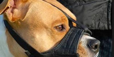 美国的养狗规定那么严格,为什么没有爱狗人士公开反对?