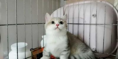 哪些养猫行为,其实是在让猫承受痛苦?