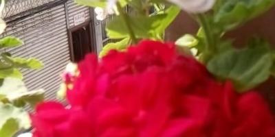 自家阳台种些什么植物好?