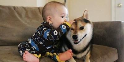 狗狗临终前能听懂你说话吗?
