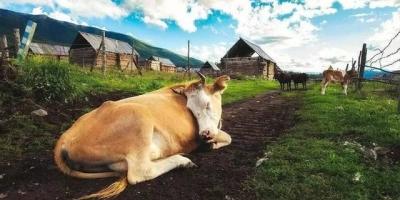 牛、马、骆驼等生物,都是站立睡觉的吗?有什么特点?