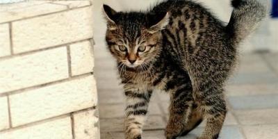 你家猫咪会不会认为自己是你生的?