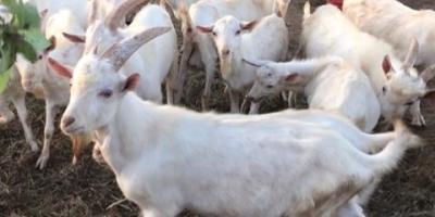 什么季节吃羊好?