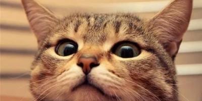 猫在多少温度以下容易感冒?