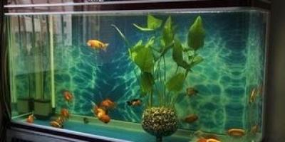 鱼缸养鱼有哪些禁忌?