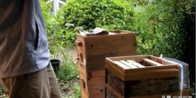 中蜂如何防止分蜂热?怎么提高产蜜量?