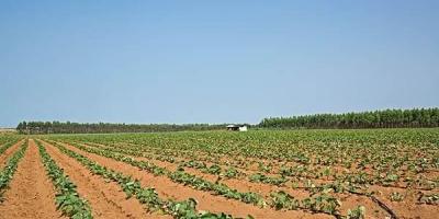 种红薯叶要施用什么化肥产量高?怎么施肥?