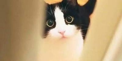 猫咪怕主人打它吗?它会懂主人的意思吗?