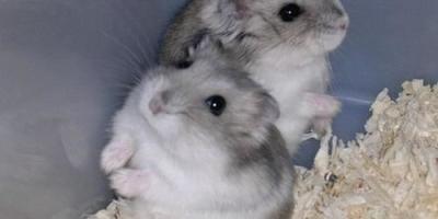 中职校养仓鼠被退学合法吗,如果因为养仓鼠被退学了该怎么办?