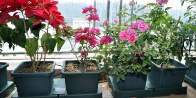 种地用的复合肥养花合适吗,怎么使用?
