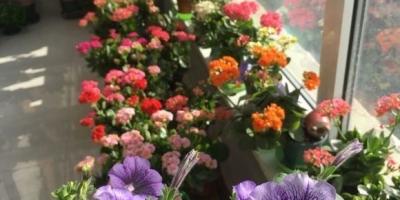 可以长期摆放在室内的花卉有哪些?