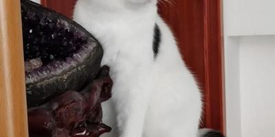 猫咪越长大越丑是一种什么体验?