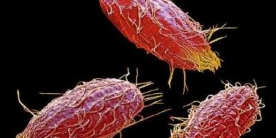 单细胞动物不会得病吗?