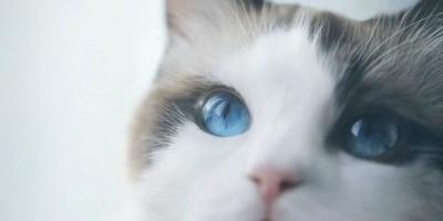 为什么猫咪知道主人心情不好了?