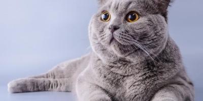 猫咪一生中最简单的愿望有哪些?