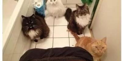 为什么主人上厕所,猫都是喜欢跟着进去?