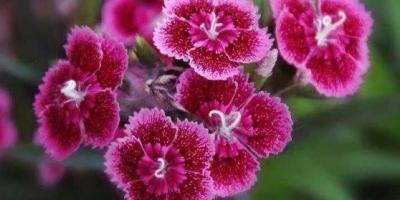 养花让你受益最大的是什么?