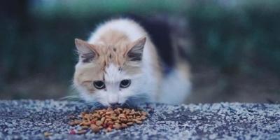 喂了一个月单位的流浪猫,被挠了三回,还应该喂吗?