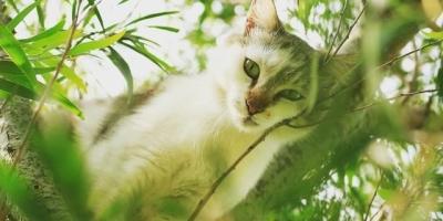 猫两年没洗澡,会有细菌吗?
