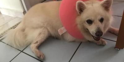 如果你的宠物生病了,但是你没有那么多钱,你会借钱给它治病么?