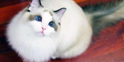 家里养了猫猫,衣服上都是毛,怎么快速去除?