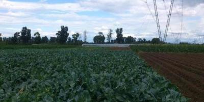 农村家庭中有成员死亡的,其土地经营权应该部分被收回吗?