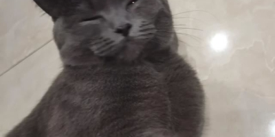 大家都怎么养猫,平时都需要对猫做些什么?