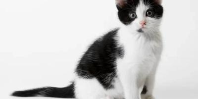 为什么有些办公室可以养小猫小狗这样的宠物?