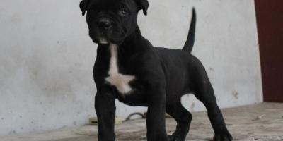 请问下有知道这是什么狗狗吗?6-7个月了,15斤?