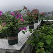 我家里养了一盆特别喜欢的花,可是被朋友看好了,我给不给?