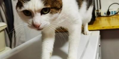 家里养的七个多月的小猫,最近晚上早上总是叫,睡眠不好了怎么办?
