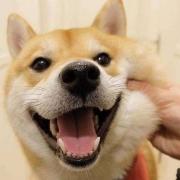 被狗的牙齿轻轻刮破一点皮有事吗?
