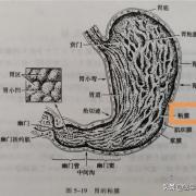 胃癌一般哪个部位痛?为什么?