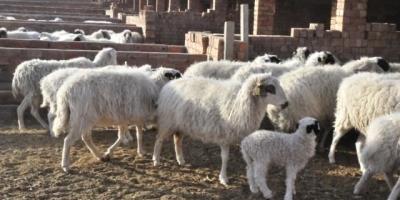 现在农村搞养殖,销路是个问题,有什么好办法吗?