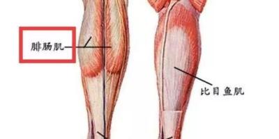 如何瘦小腿?