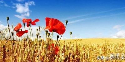 农业的出路在何方?希望有好的经验指导?