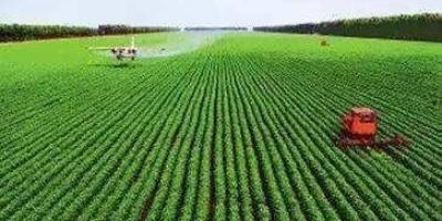县乡村要把基本农田流转建猪场行吗?